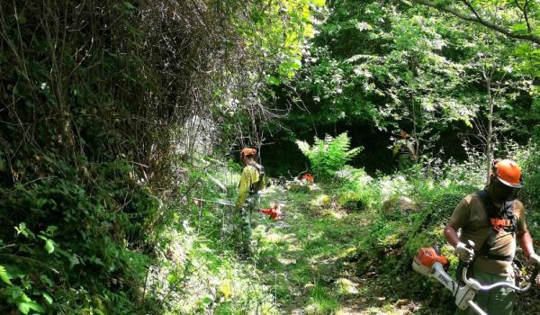 Via Romana/Geira alvo de ação de limpeza